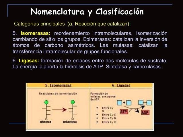 Categorías principales (a. Reacción que catalizan):5. Isomerasas: reordenamiento intramoleculares, isomerizacióncambiando ...