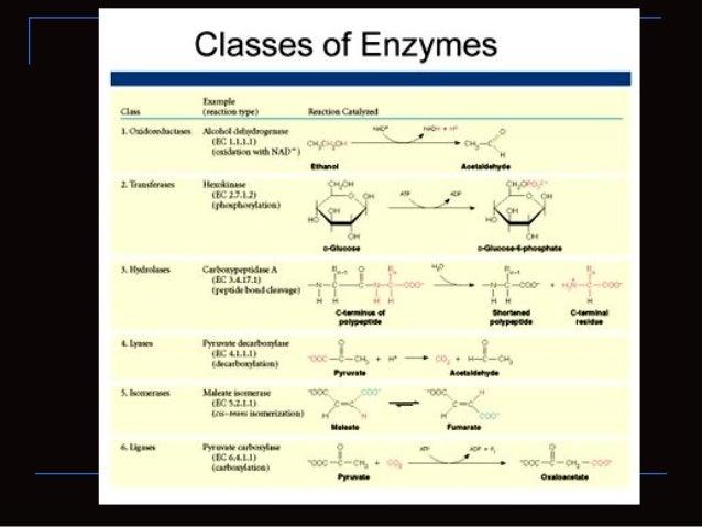 Holoenzimas Algunas enzimas necesitan moléculas que no sonproteínas para realizar su actividad enzimática. Holoenzima: e...