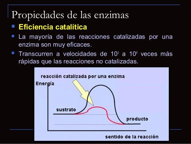 Propiedades de las enzimas Regulación La actividad enzimática puede ser regulada. Las enzimas pueden ser activadas oinh...