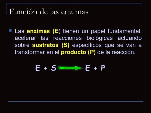Funciones de las enzimas Sitios Activos Contiene cadenas laterales de aminoácidos que creanuna superficie tridimensional...