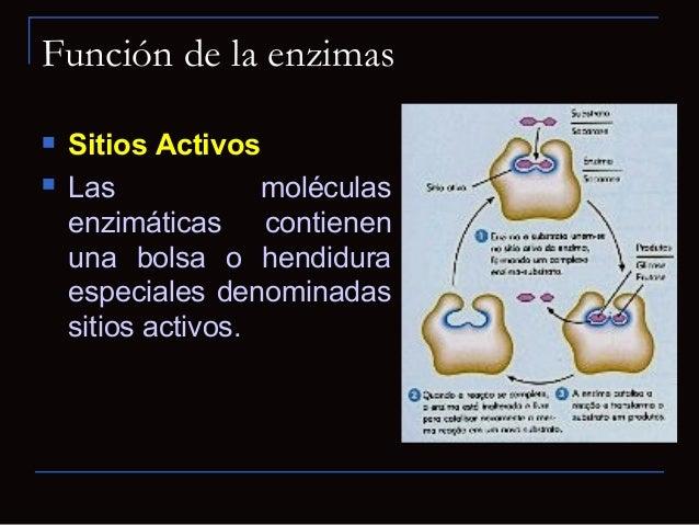 Acción enzimáticaEsquema para una función catabólica enzimáticaLa enzima posee un centro activo, con el que se une alsustr...