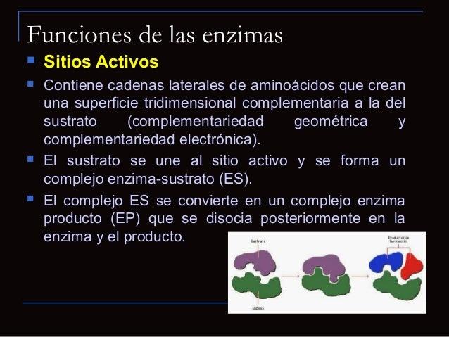 Esquema para una función anabólica enzimáticaLos sustratos se unen al centro activoSe forma el complejo enzima-sustratoSe ...