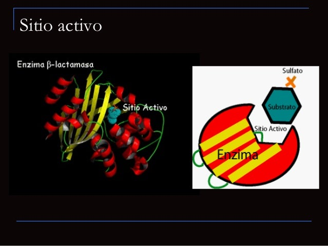 Esquema para la especificidad del sustratoCada enzima puede cambiar solamente un sustrato específico.Cada enzima puede cam...