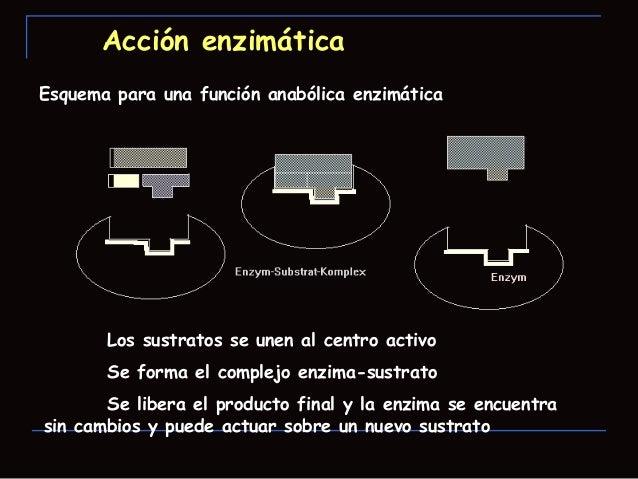 Acción Enzimática A) Cambios de energía que ocurren durante lareacción. Todas las reacciones químicas tienen una barrera...