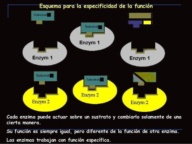 Acción Enzimática Cambios de energía que ocurren durante lareacción.El gráfico de energía libre vs. Coordenada de reacció...