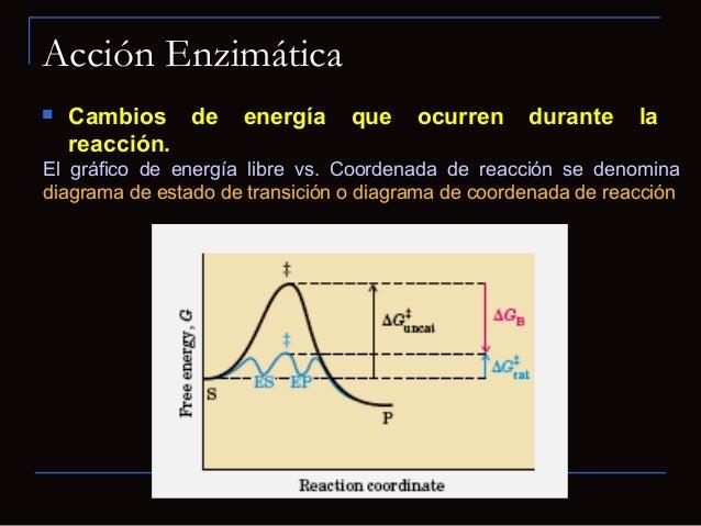 """Interacciones del complejo enzima-sustrato Modelo """"encaje inducido"""" propuesto por DanielKoshland.- Sitio activo flexible-..."""