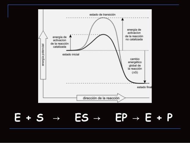 Interacciones del complejo enzima-sustrato Las interacciones entre enzima y sustrato sonde naturaleza no covalente, de fo...