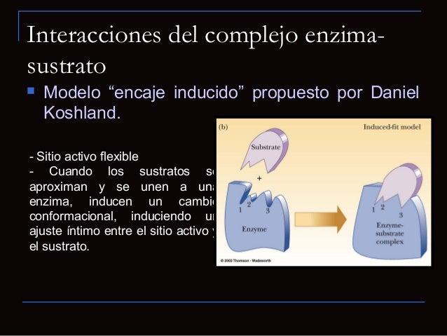 Mecanismos Catálicos de las enzimas Catálisisacidobásica: