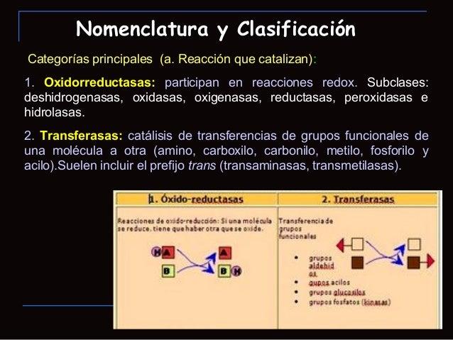 Categorías principales (a. Reacción que catalizan):1. Oxidorreductasas: participan en reacciones redox. Subclases:deshidro...