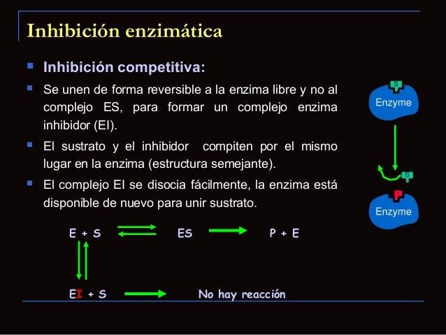 Regulación de la actividad enzimática Sitios de unión alostéricos Efectores homotropos: Cuando el propio sustrato actúac...
