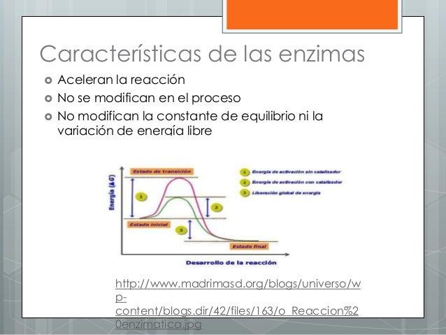 Características de las enzimas  Aceleran la reacción  No se modifican en el proceso  No modifican la constante de equil...