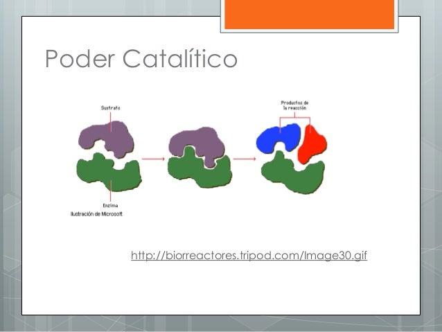 Poder Catalítico http://biorreactores.tripod.com/Image30.gif