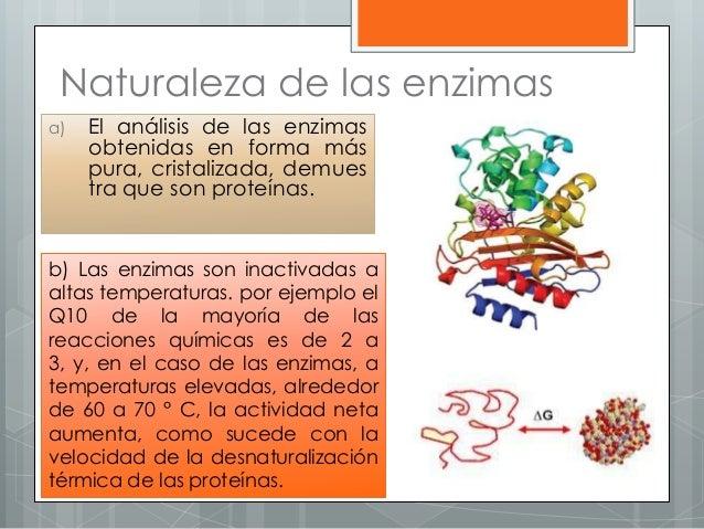 a) El análisis de las enzimas obtenidas en forma más pura, cristalizada, demues tra que son proteínas. b) Las enzimas son ...