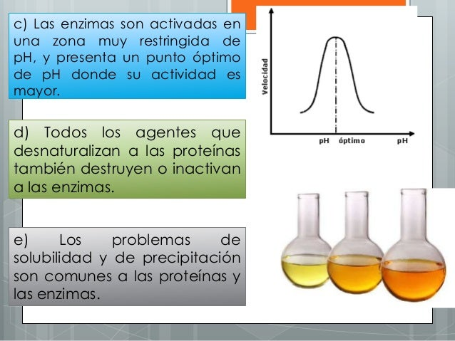 c) Las enzimas son activadas en una zona muy restringida de pH, y presenta un punto óptimo de pH donde su actividad es may...