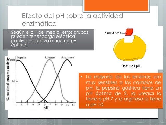 Efecto del pH sobre la actividad enzimática  Según el pH del medio, estos grupos pueden tener carga eléctrica positiva, n...