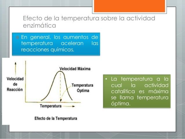 Efecto de la temperatura sobre la actividad enzimática  En general, los aumentos de temperatura aceleran las reacciones q...