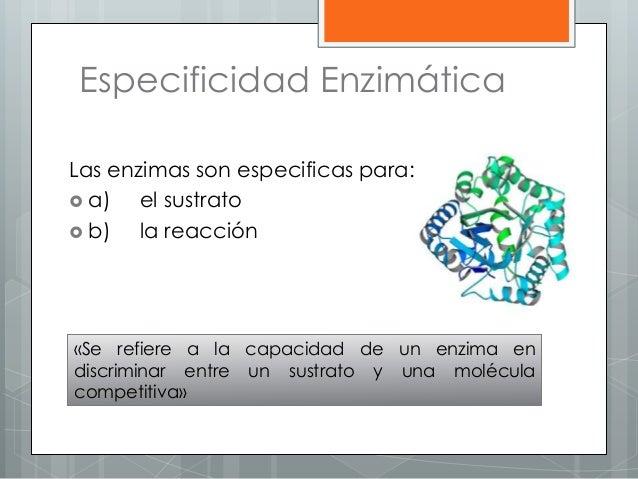 Especificidad Enzimática Las enzimas son especificas para:  a) el sustrato  b) la reacción «Se refiere a la capacidad de...