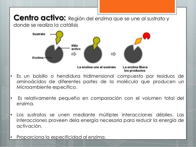 Centro activo: Región del enzima que se une al sustrato y donde se realiza la catálisis • Es un bolsillo o hendidura tridi...