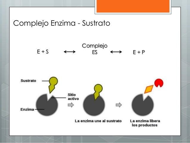E + S Complejo ES E + P Complejo Enzima - Sustrato