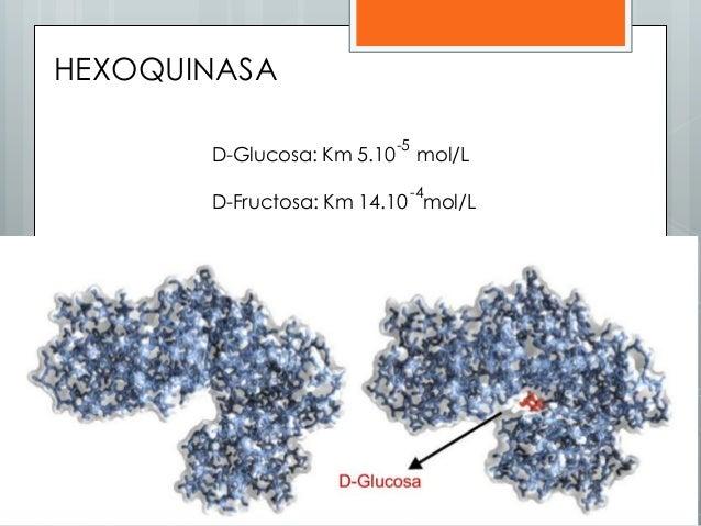 D-Glucosa: Km 5.10 mol/L D-Fructosa: Km 14.10 mol/L -5 -4 HEXOQUINASA