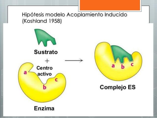 Hipótesis modelo Acoplamiento Inducido (Koshland 1958)