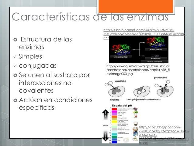 Características de las enzimas  Estructura de las enzimas  Simples  conjugadas  Se unen al sustrato por interacciones ...