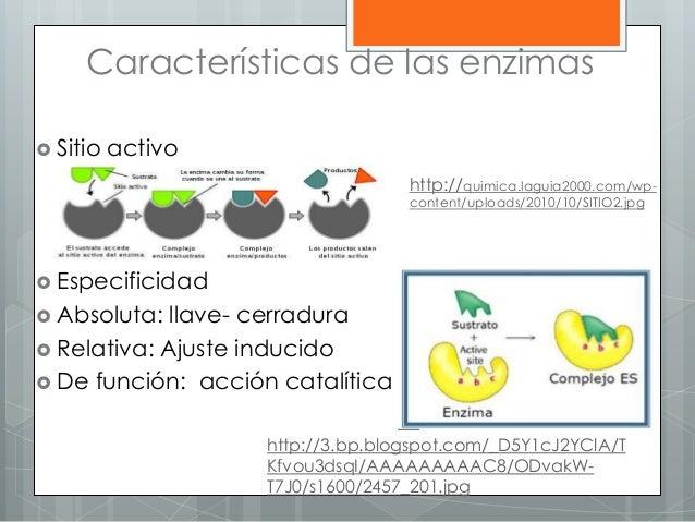 Características de las enzimas  Sitio activo  Especificidad  Absoluta: llave- cerradura  Relativa: Ajuste inducido  D...