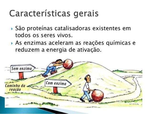 Enzimas Slide 3