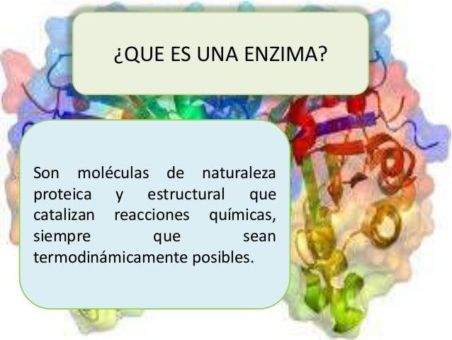procesos metabolicos y anabolicos