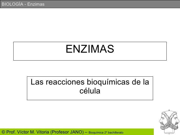 ENZIMAS Las reacciones bioquímicas de la célula