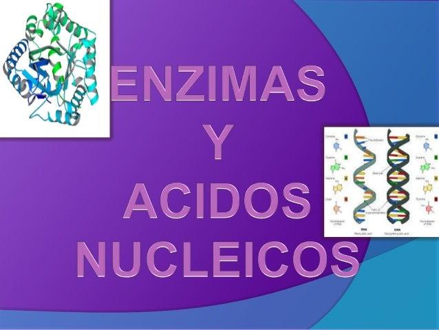 Enzimas y acidos nucleicos