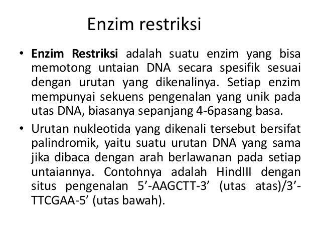 Enzim restriksi • Enzim Restriksi adalah suatu enzim yang bisa memotong untaian DNA secara spesifik sesuai dengan urutan y...