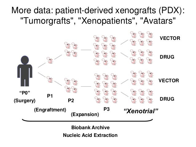 """""""P0"""" P1 P2 Biobank Archive Nucleic Acid Extraction """"Xenotrial""""P3 VECTOR DRUG More data: patient-derived xenografts (PDX): ..."""