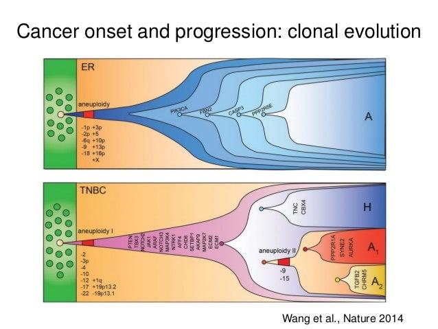 Cancer onset and progression: clonal evolution Wang et al., Nature 2014