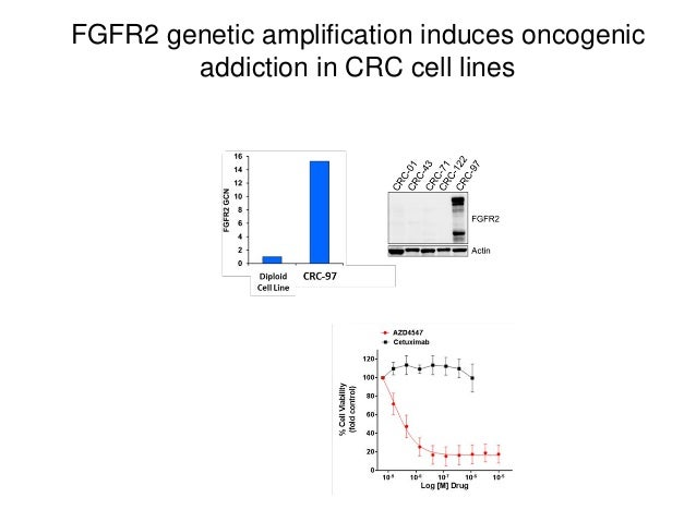 FGFR2 genetic amplification induces oncogenic addiction in CRC cell lines