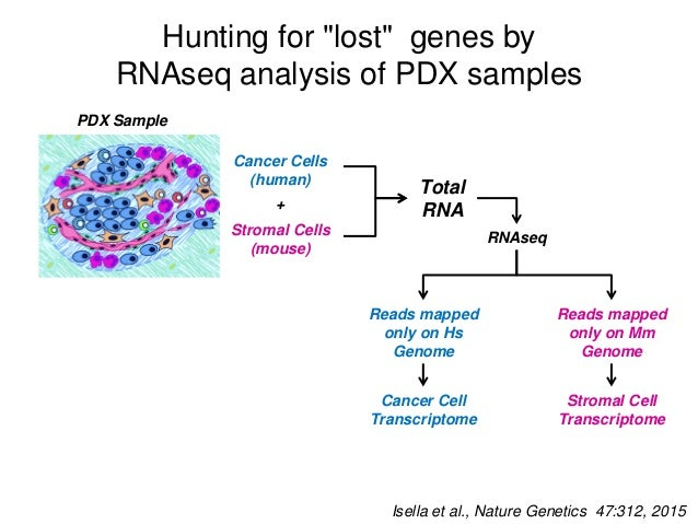 CMS4/SSM genes are expressed as mouse transcripts in PDXs Mousetranscriptlevel (RPM) Human transcript level (RPM) INFL-GOB...