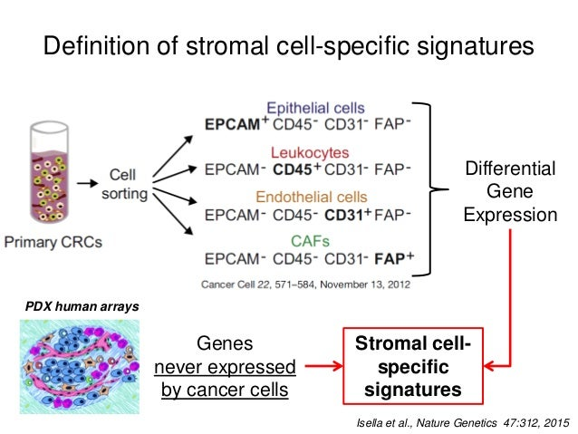 Definition of stromal cell-specific signatures Leucocyte Signature genes FAP+ Cells CD45+ Cells CD31+ Cells CAF Signature ...