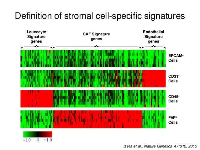 Stromal scores reflect tumor biology Triple low score TCGA Digital Slide Archive