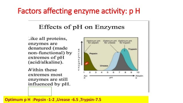 factors affecting enzyme activity Factors affecting enzyme activity the conditions of the reaction have a great impact on the activity of the enzymes enzymes are particular about the optimum conditions provided for the reactions such as temperature, ph, alteration in substrate concentration, etc.