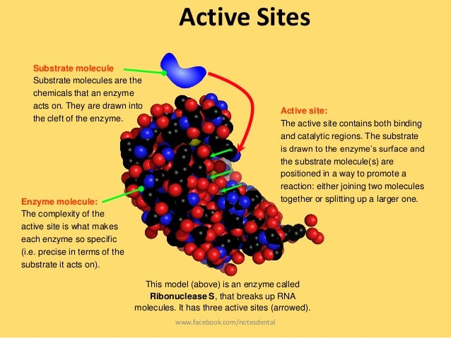 what is a active site of an enzyme