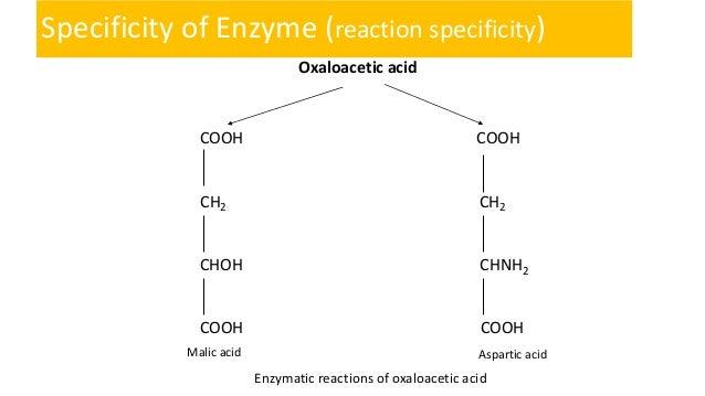 Oxaloacetic Acid Decarboxylation Enzyme