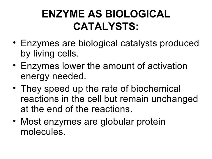 role of enzymes in metabolism