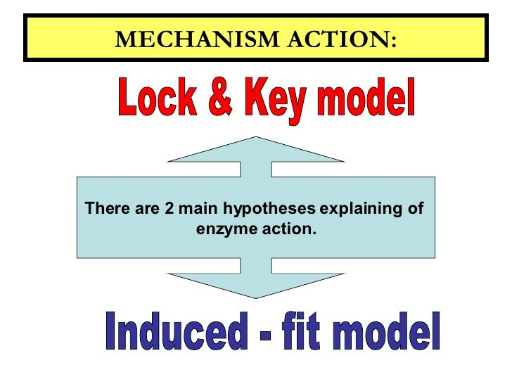 Enzyme and metabolism ccuart Image collections