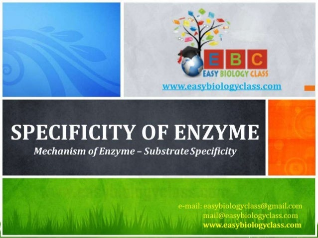 SPECIFICITY OF ENZYME  Mechanism of Enzyme - Substrate Specificity