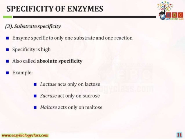 SPECIFICITY OF ENZYMES ' . '   IAN BIOLOGY QM?       ( 3 ).  Substrate specificity I Enzyme specific to only one substrate ...