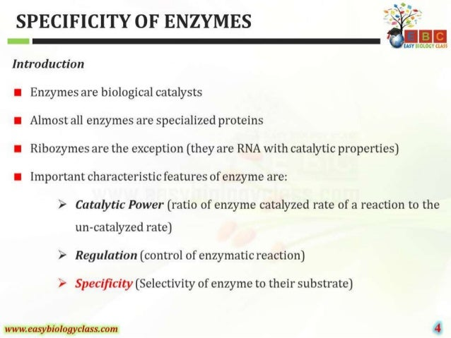 """SPECIFICITY OF ENZYMES ' .    EASY BIOLOGY CIA""""      Introduction  I Enzymes are biological catalysts  I Almost all enzyme..."""