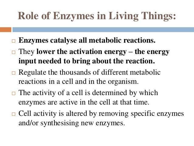 Cont..  3. Linkage specificity - the enzyme will act on a particular type of chemical bond regardless of the rest of the ...