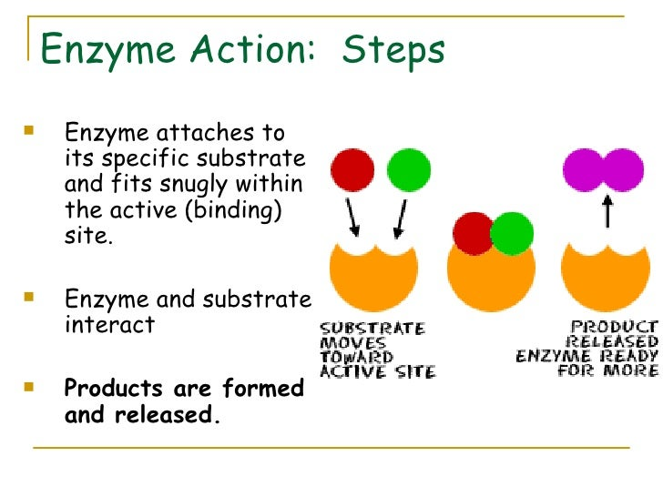 the reaction of catalase in varioius substance Catalase activity: effect of enzyme as catalysts, substances that speed up chemical reactions without enzymes are known to catalyze this reaction: catalase.