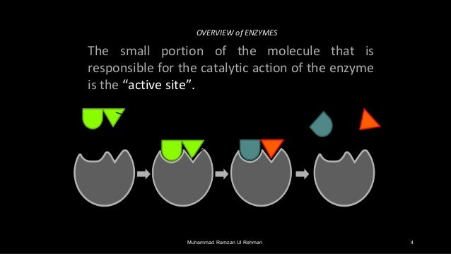 biochemistry enzymes Which of the following statements about the active site of an enzyme is correct a) the active site of an enzyme binds the substrate of the reaction it catalyses more tightly than it does.