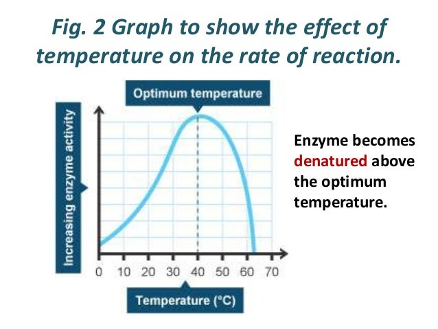 effect of ph and temperature enzyme catalase reaction rate Ion concentration on the catalase reaction over a wide range of ph is beset with   549 destruction of the catalase increases parallel to the reaction velocity we  must conclude  bined effect of temperature and ph variations that catalase is   45 minutes, at which time the enzyme was completely inactivated, but that a.
